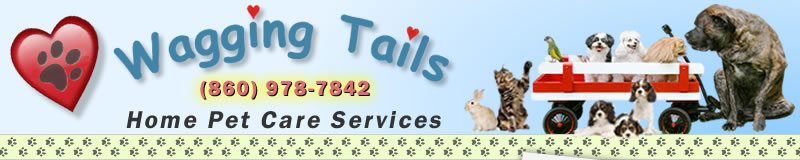 Banner Image - Wagging Tails Home Pet Care, Pet Sitting, Enfield CT